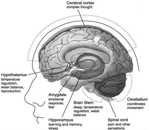 cannabinoid-receptors